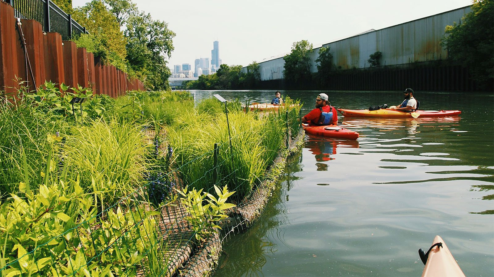 Volunteers and employees of Urban Rivers kayak near the organization's floating gardens on the North Branch of the Chicago River