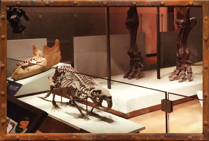 giant beaver skeleton ...