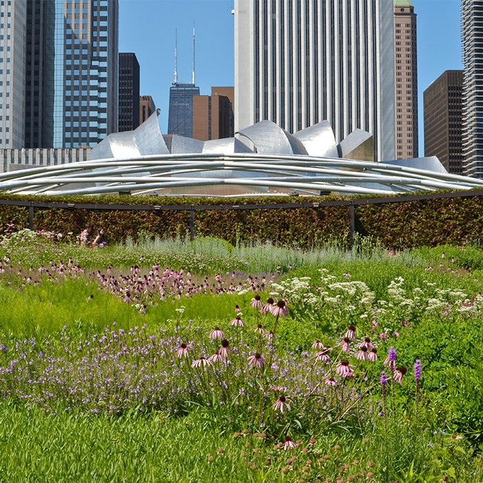 Six ways you can help the chicago river the chicago river tour located above a parking garage and railroad tracks it is also part of the worlds largest green roof solutioingenieria Choice Image