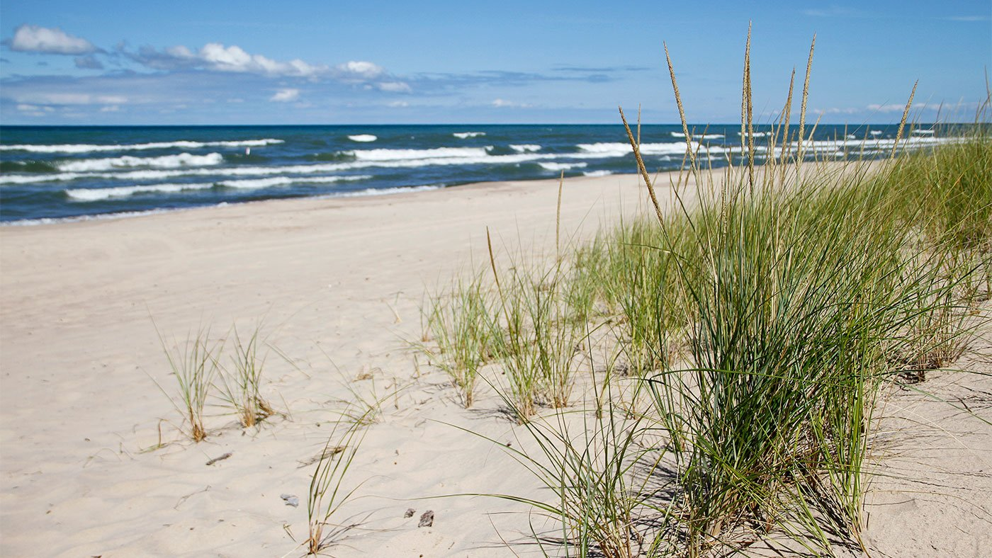 Dune grass at West Beach in the Indiana Dunes National Park in Indiana