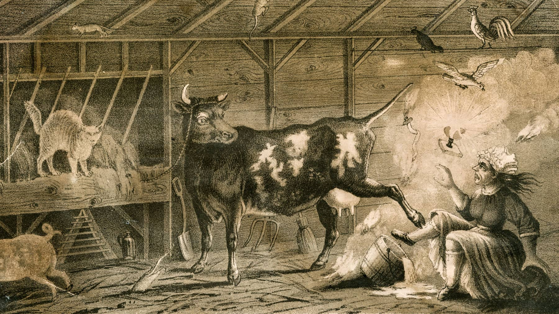 Caricature illustration of Mrs. O'Leary in her barn as her cow kicks over a kerosene lantern