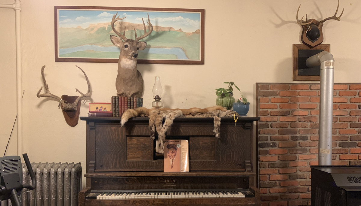 A taxidermy collection
