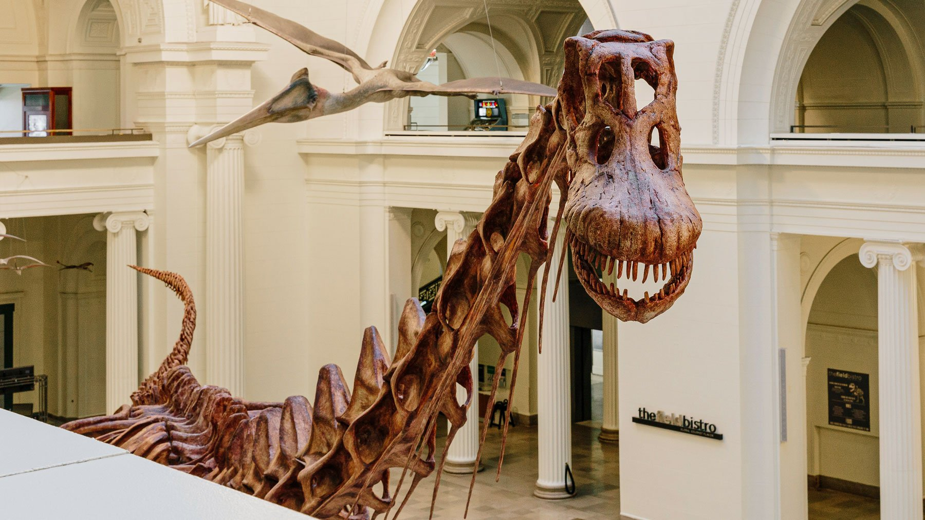 Maximo titanosaur cast in museum