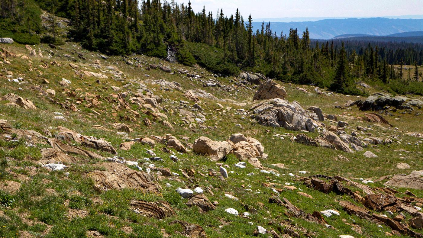 Field of stromatolite fossils