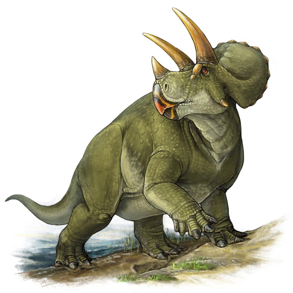 Triceratops art