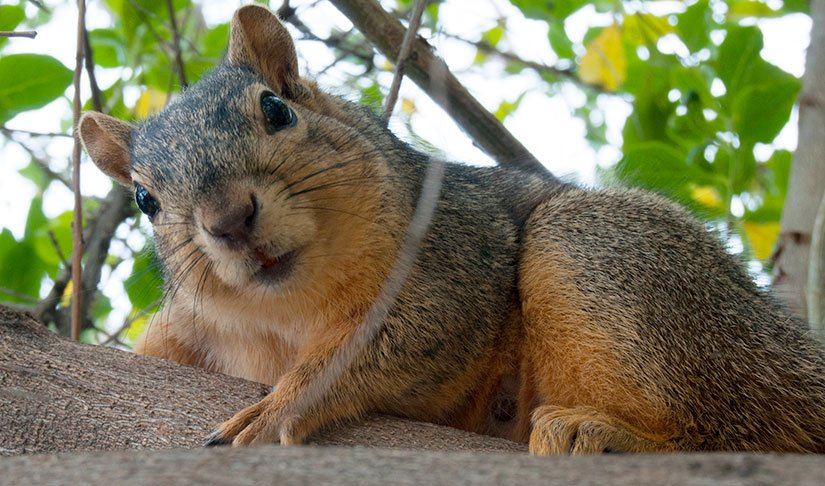 the great squirrel mystery wttw chicago