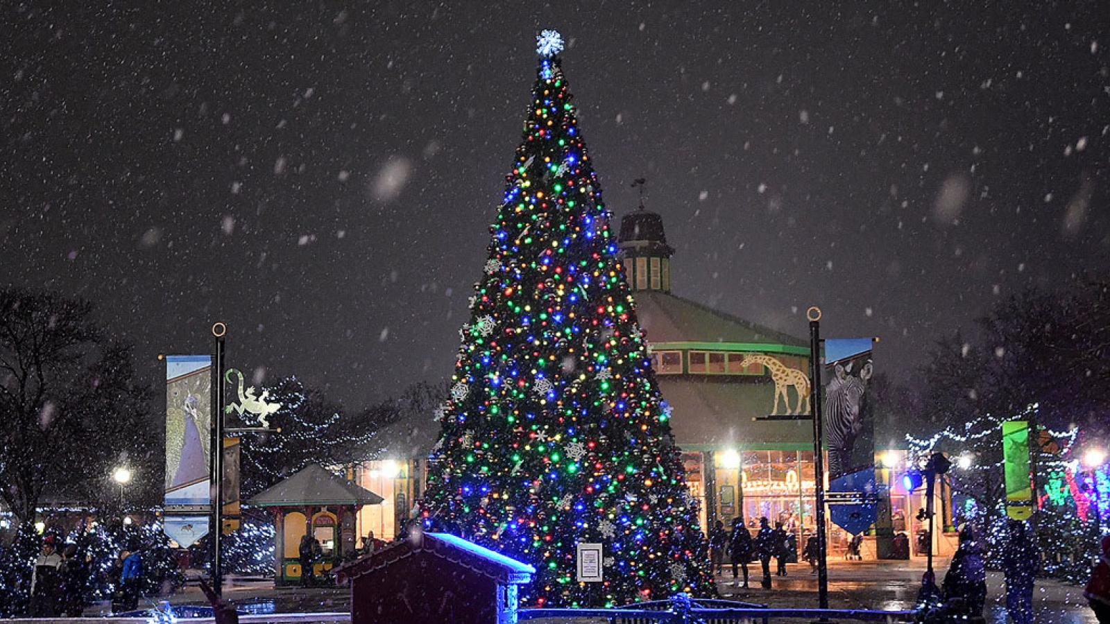 Christmas tree and other lights at Brookfield Zoo Holiday Magic event