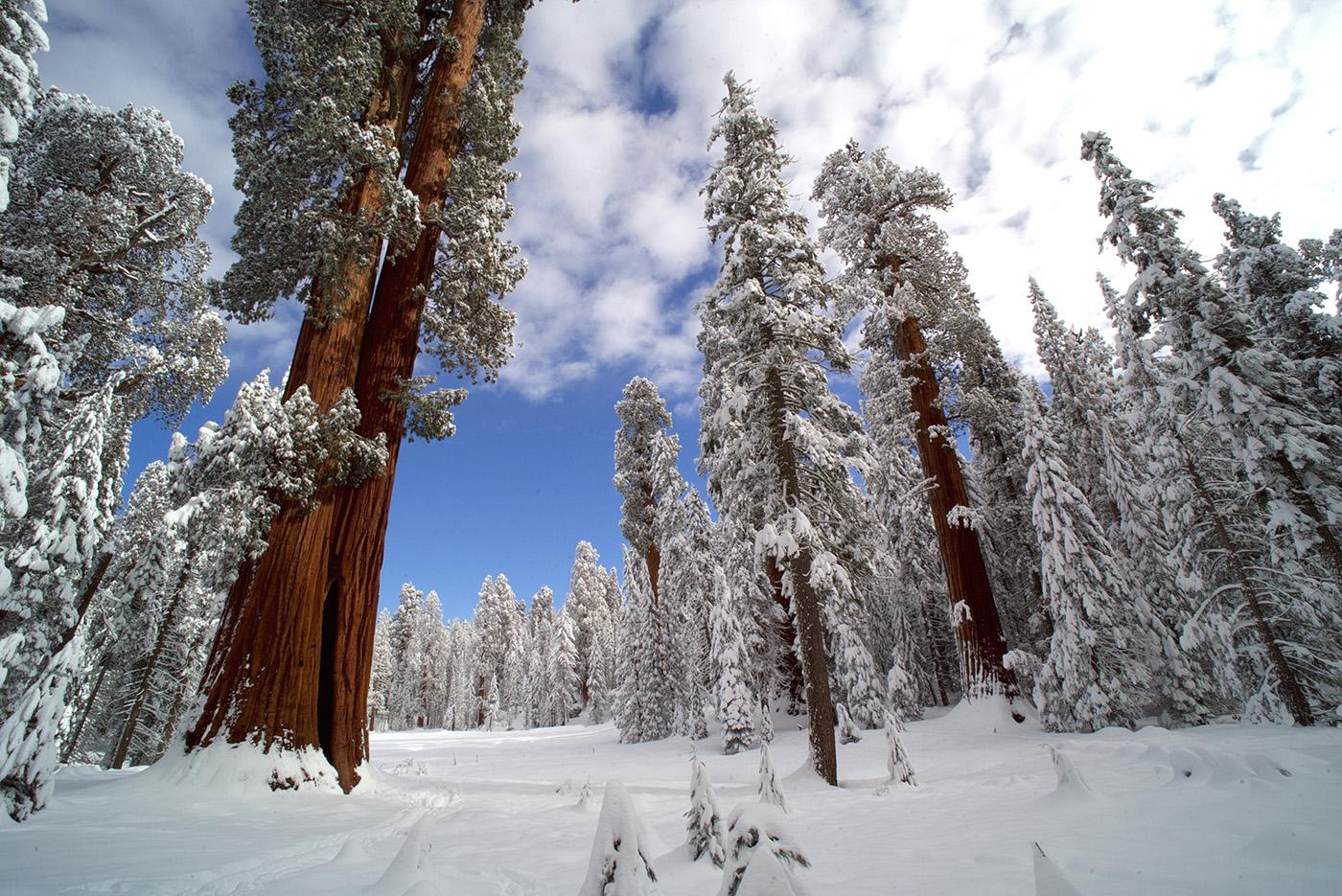 The Giant Forest in Sequoia National Park, home to the largest trees on Earth. (Courtesy of Nimmida Pontecorvo/© THIRTEEN Productions LLC)