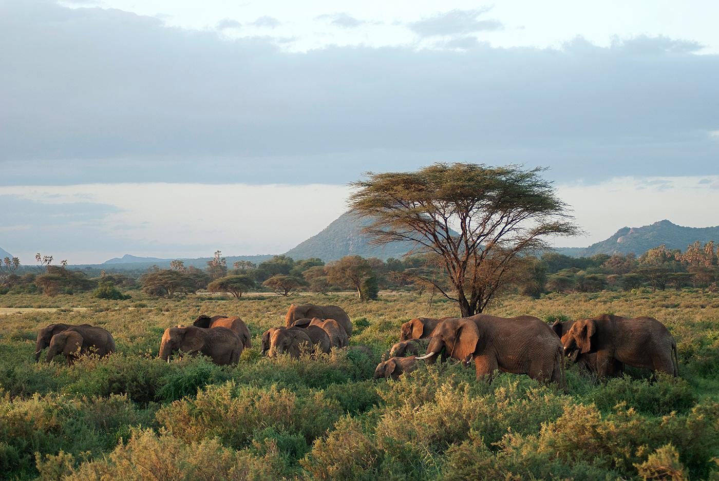A herd of elephants in Samburu National Park, Kenya. Photo: BBC/Sarah Bright