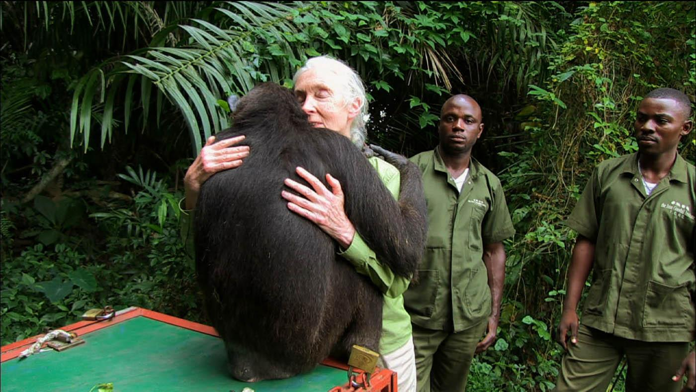 Jane Goodall with a chimpanzee Photo: Tigress Productions
