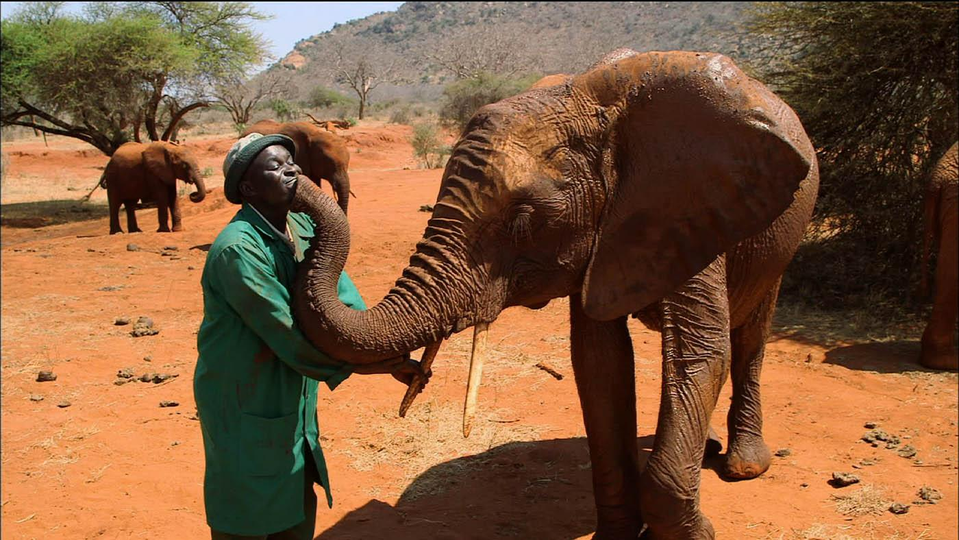 Edwin Lusichi and an elephant. Photo: Tigress Productions