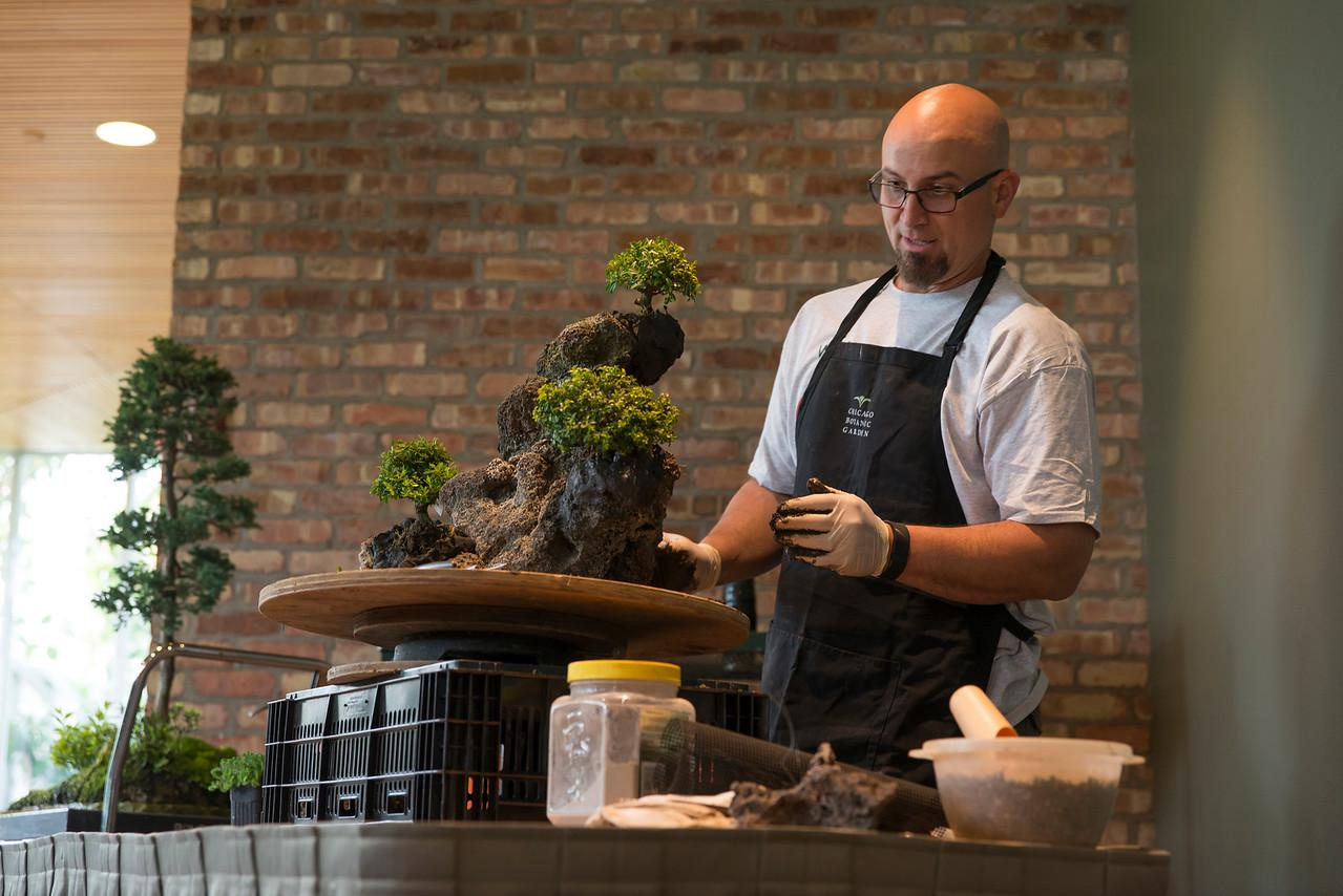 Telling A Story Of Trees Life Through Bonsai Wttw Chicago Ficus Tree Wiring Are Trained Root And Foliage Pruning The Use Wires Careful Watering Fertilizer Says Chris Baker