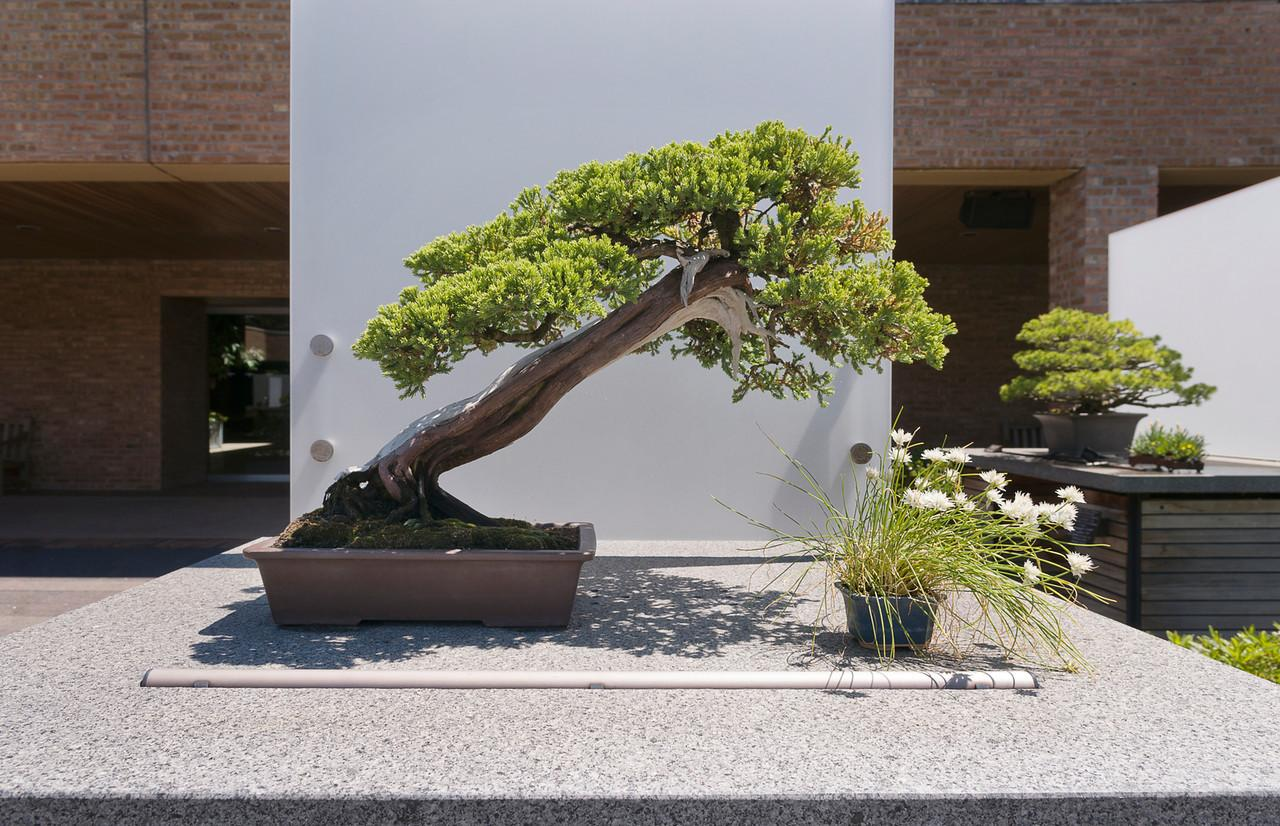 Bonsai Literally Translates To Planted In A Container But That Makes The Anese Art Form Sound Simpler Than It Is Photo Chicago Botanic Photos