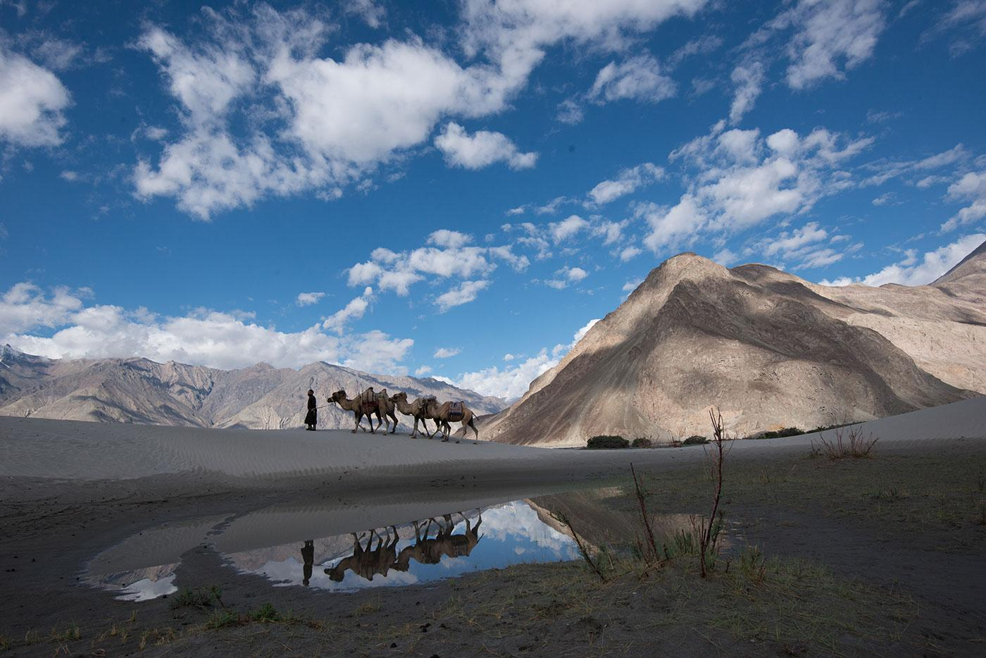 A camel herder leads his camel train over the sand dunes in Nubra Valley, India. Photo: BBC/Alex Lanchester