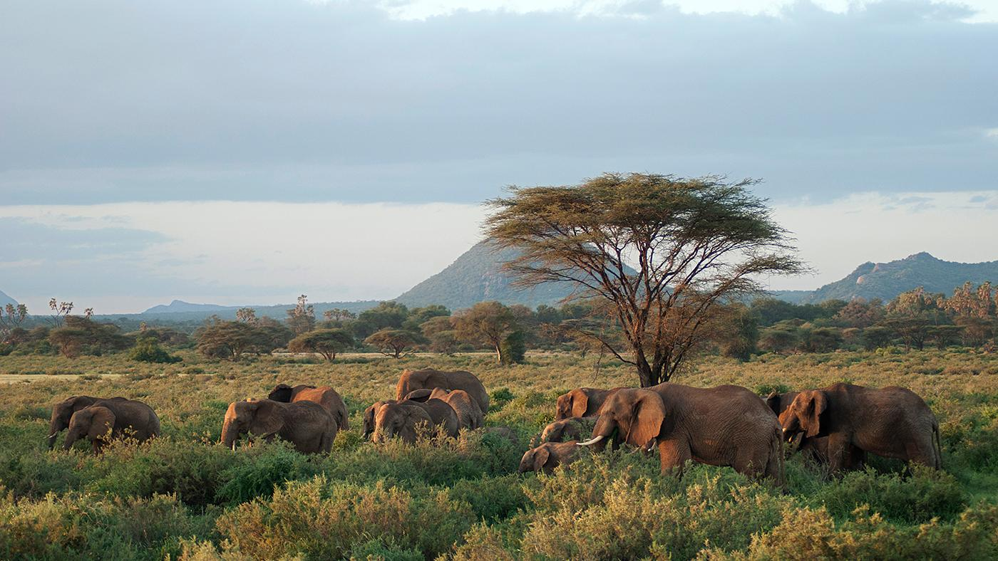 A herd of elephants in Samburu National Park, Kenya. Photo: BBC/Sarah Bright