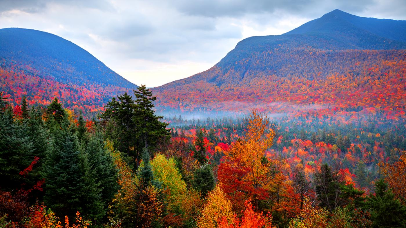 Autumnwatch New England. Photo: Denis Tangney Jr./Getty Images