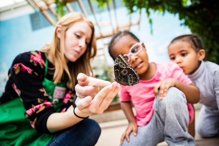 New adult butterflies are released at 2:00 pm every day as part of the Museum's First Flight program.