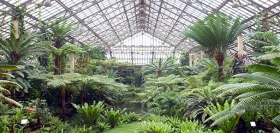Chicago's Garfield Park Conservatory