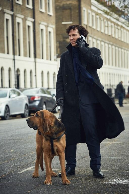 Sherlock on the job with a dog.