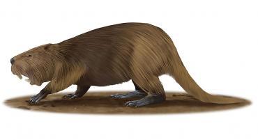 prehistoric giant beav...